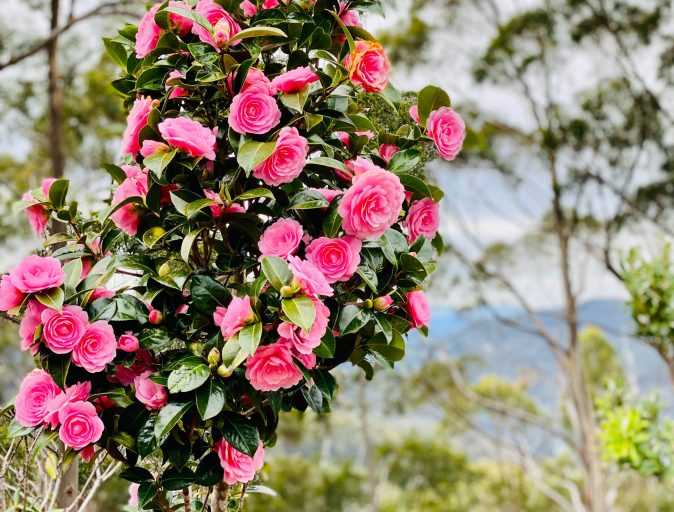 (Pink) Flower Power