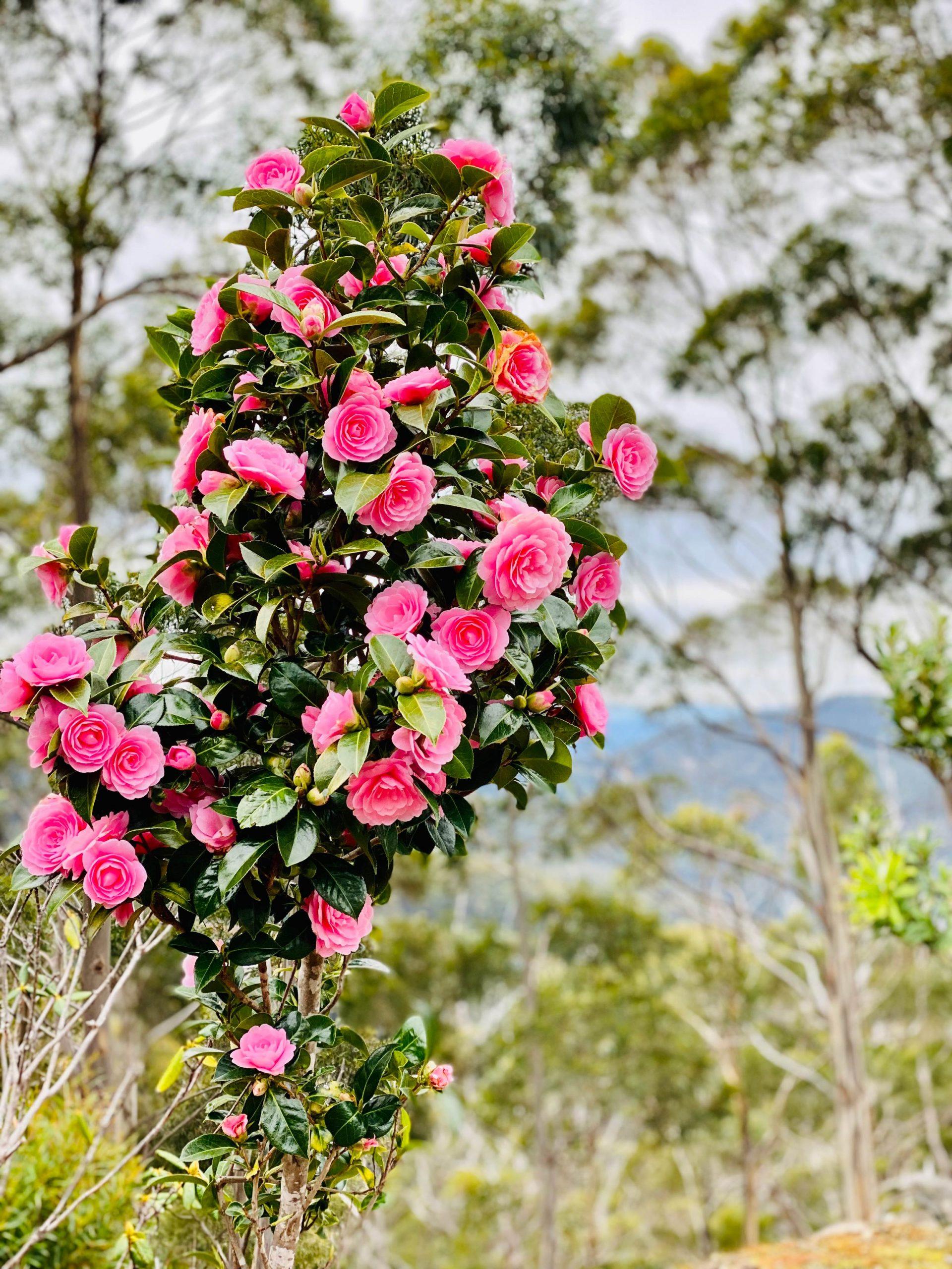 Annie Robson Flower Power pic 1